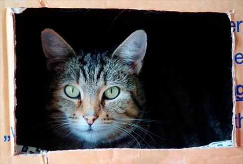 고양이의 물리학 수준이 이 정도