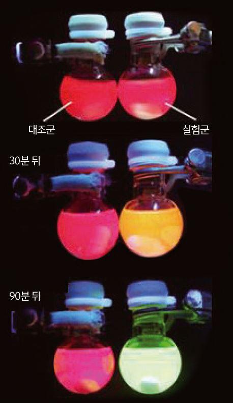 화학반응 부산물과 만나면 빛을 내는 나노물질을 플라스크에 넣었다. 대조군 플라스크(왼쪽)와 달리 화학반응이 일어난 플라스크(오른쪽)의 색깔이 다채롭게 변하고 있다. - Syracuse University 제공