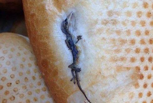 단백질이 풍부한 도마뱀 구이 빵