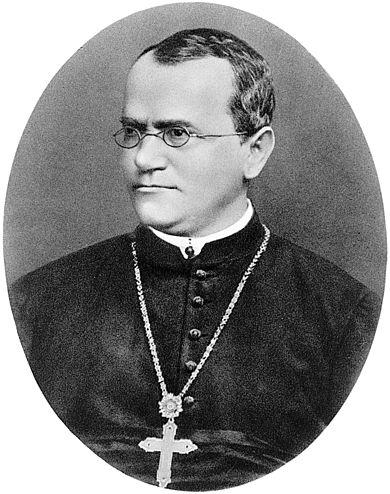 멘델은 오스트리아제국(현 체코)의 브루노 수도원에 머무르며 1856년부터 1863년까지 완두를 대상으로 교배실험을 했고 이 결과를 1866년 논문으로 발표했다. 올해는 논문이 나온지 150년 되는 해다. 위키피디아 제공