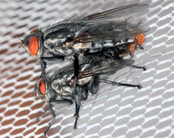 곤충과학저널 제공