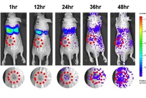 새살이 빠르게 솔솔~ 줄기세포 치료제 개발