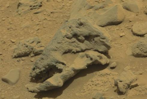 화성에서 공룡 머리 발견? 시끌