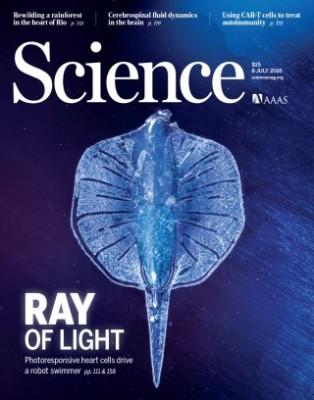 광(光) 자극으로 조정하는 '가오리 로봇'