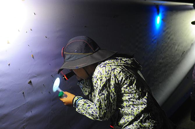 야간곤충탐사에서 곤충을 관찰하고 있다. - 국립수목원 제공