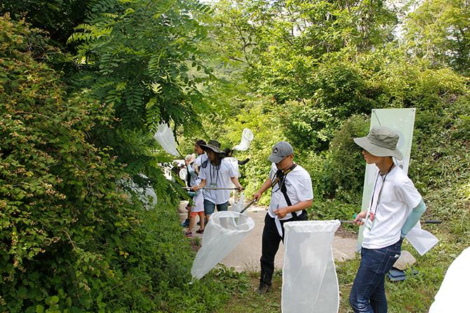 포충망을 양옆으로 흔들며 나무를 치면 곤충이 안으로 떨어져 채집할 수 있다. - 김정 기자 ddanceleo@donga.com 제공