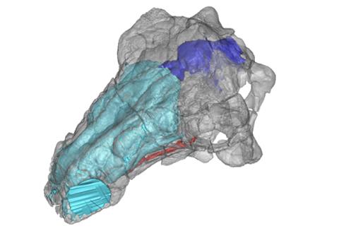 로봇, 3D로 공룡 연구해보니…'쥬라기공원' 허구가 아니네!
