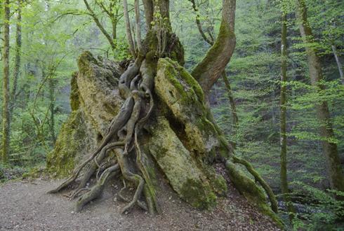 균과 공생해 뿌리 성장 조절… 나무도 영양분 스스로 찾는다