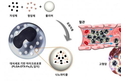 면역세포에 로봇 태워 암 세포 공격한다