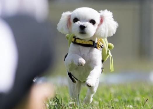 이름만 '반려'…여름휴가철 버려지는 반려동물 급증