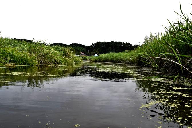 다양한 식물을 관찰할 수 있는 자연습지. - 고종환 제공