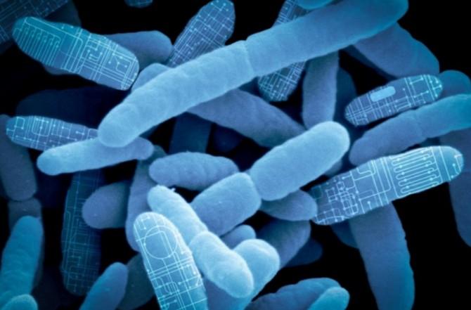 팀 루 미국 매사추세츠공대(MIT) 전자연구소 교수팀은 최근 살아 있는 미생물 세포를 이용해 소량의 약물을 언제 어디서든 생산할 수 있는 휴대용 기기를 개발했다. - MIT 제공
