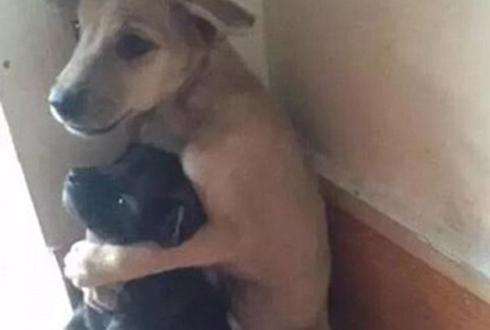 강아지 백허그, 꼭 껴안은 강아지들 '인기'