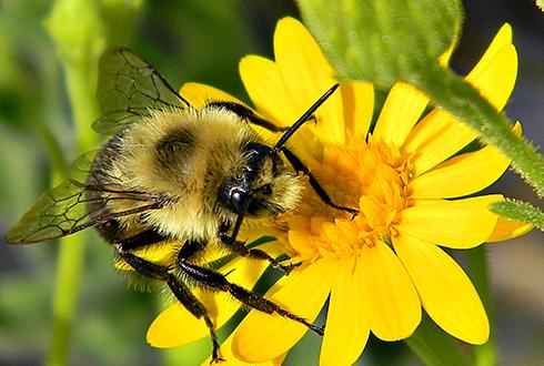 벌이 꿀과 꽃가루를 모으는 '알짜배기 꽃' 따로 있다