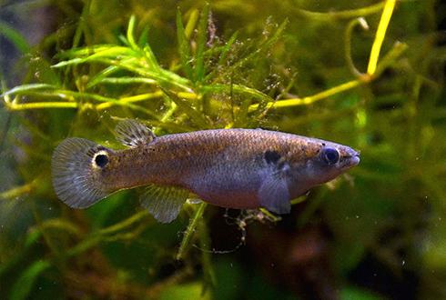 더울수록 물 밖으로 나오는 물고기