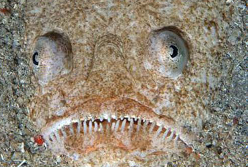 """이 괴상한 물고기의 정체는? """"바닷속 암살자"""""""