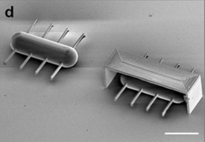 DGIST 연구팀이 짚신벌레의 섬모운동을 모방해 만든 마이크로로봇. - DGIST 제공