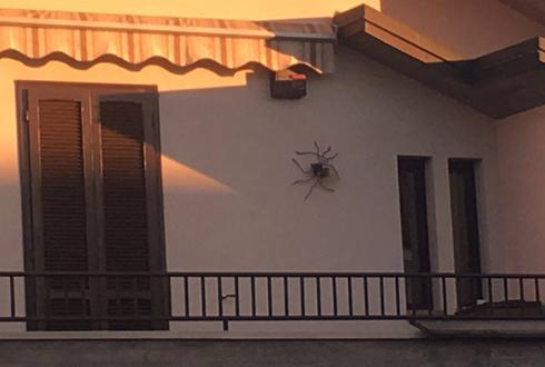 벽에 붙어 있는 초대형 거미 '포착'