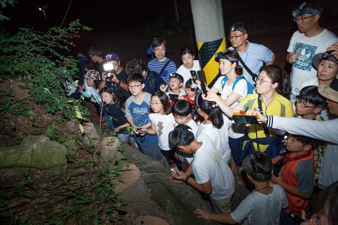 야간 곤충 탐사에서는 매미의 우화를 지켜봤다. - 김은영 기자, 김정 기자 제공