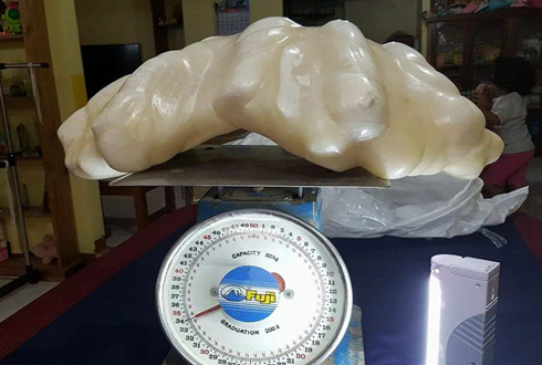 34kg, 1천억원짜리 진주 '화제'