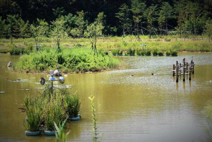 2011년에 추진되어 2015년 6월 준공된 영랑호 습지 생태공원. - 고종환 제공