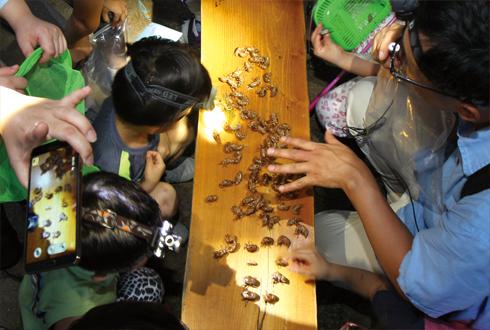 자연과 공생하는 법을 배우는 매미 탐사