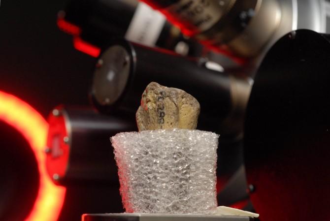 루시의 손목뼈를 컴퓨터 단층촬영하는 모습. - 미국 오스틴 텍사스대 제공