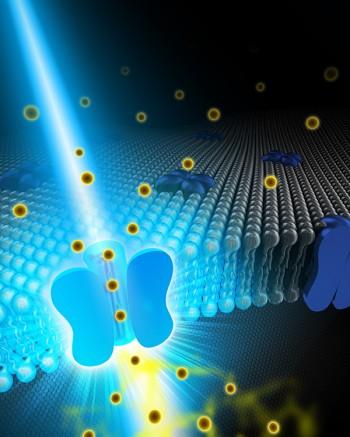 빛으로 살아 있는 세포 내 칼슘이온을 조절하는 3D 이미지. 지난해