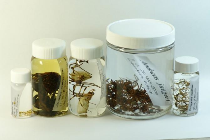 김 교수는 국내 거미종의 대부분을 표본으로 갖고 있다.  - 건국대 김승태 교수 제공