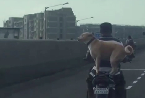 개 태우고 시속 80km으로 달리는 오토바이