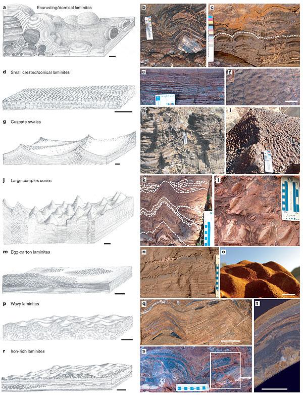 2006년 학술지 '네이처'에는 34억3000만 년 전 암석에서 무더기로 발견한 스트로마톨라이트 화석을 일곱 가지 유형으로 분류한 논문이 실렸다. 이후 당시 스트로마톨라이트가 진짜인가 여부를 둘러싼 논쟁이 잦아들었다. - 네이처 제공