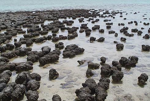 37억 년 전 지구엔 이미 생물이 번성했다!