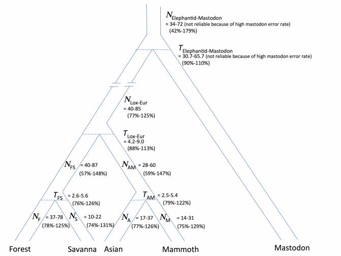 게놈 분석으로 추정한 코끼리과 동물의 계통도. 아프리카코끼리의 조상과 매머드/아시아코끼리의 공통조상이 먼저 갈라졌고 그 뒤 매머드와 아시아코끼리가 갈라졌다. 이에 따르면 한 종으로 알고 있었던 아프리카코끼리도 실은 두 종이다. - 플로스 생물학 제공