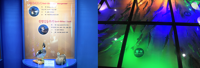 화진포호에 사는 조류, 어류들을 차례차례 살펴볼 수 있다. - 고종환 제공