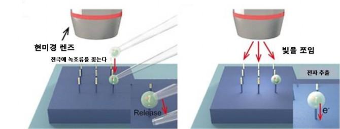 류 교수팀이 개발한 나노전극에는 기존과 달리 여러 개의 세포를 꽂아 전자를 추출할 수 있다. - 연세대학교 제공