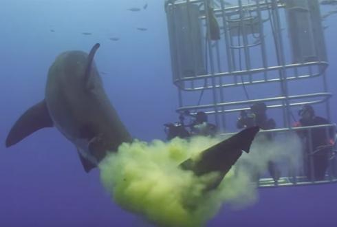 상어가 뿜은 '노란 폭탄' 화제