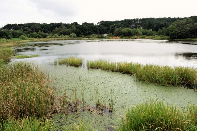 옛날 이 호수에 봉황새 같은 큰 새가 날아들었다는데서 이름 지어진 봉포호. 하지만 지금은 그러한 풍경을 보긴 어렵다. - 고종환 제공