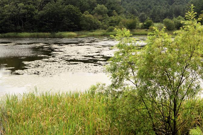 천적인 가물치를 방류한 이후 블루길 치어와 황소개구리 올챙이 개체 수가 점차 줄어들고 있다. 하지만 호수가 건강을 되찾기까지는 오랜 시간이 걸릴 것으로 보인다. 지속적인 노력이 필요하다. - 고종환 제공