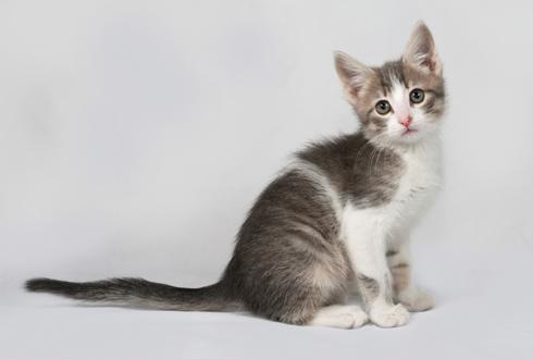 인간에게 치명적인 고양이 할큄병?