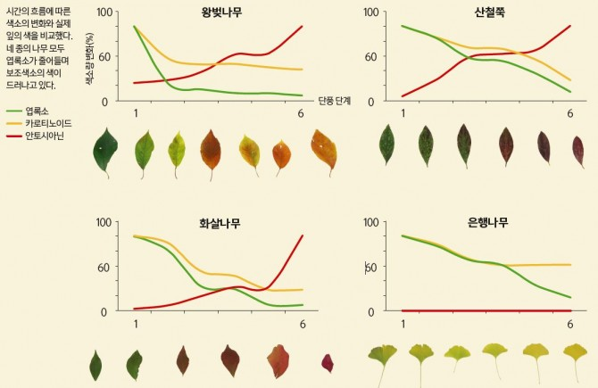 자료 출처: 김선희 국립산림과학원 박사 - 과학동아 제공