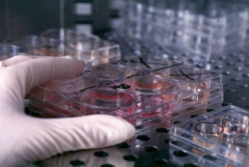 논문 2000편에 등장한 세포주, 오리지널과 다르다고?