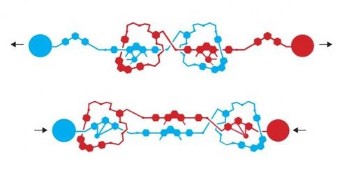 장 피에르 소바주가 2000년에 만든 로탁세인. 2개의 고리형 분자가 중심 부분과 끝 부분을 반복해 움직이도록 하면 전체 구조체를 수축, 이완하게 만들 수 있다. - 노벨상위원회 제공
