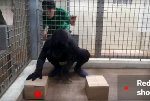 침팬지도 사람 같은 '공감능력' 있다