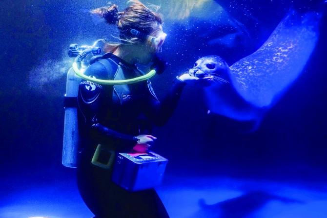 아쿠아플라넷63에서는 물범이 영양소를 골고루 섭취하도록 세심하게 관리하고 있다. - 서동준, 아쿠아플라넷63 제공