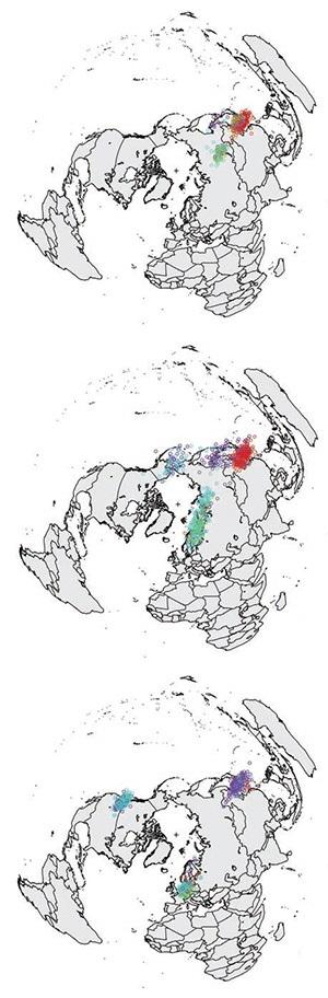 시간에 따른, 조류인플루엔자(AI)에 감염된 조류의 분포 변화를 나타낸 그래프. 왼쪽은 한국에서 AI가 유행하기 시작한 직후인 2014년 4월경, 가운데는 일본과 유럽으로 야생 조류가 이동해 간 2014년 8월경, 오른쪽은 북아메리카 대륙까지 AI가 확산된 2014년 11월경이다. 빨간색 점은 농장에서 키우는 닭, 녹색 점은 농장에서 키우는 오리, 파란색 점은 장거리 이주 야생 조류, 보라색 점은 단거리 이주 야생 조류를 나타낸다. - 사이언스 제공
