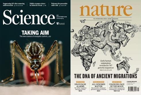[표지로 읽는 과학] '유전자 조작'모기 풀어 모기 잡는다