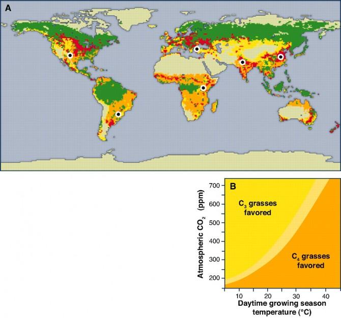 세계의 식물 분포. 풀(초본) 가운데 C3 식물은 노란색, C4 식물은 오렌지색이다. 녹색은 숲(목본). 빨간색은 농경지다. 덥고 건조한 지역에서 C4 식물이 우세함을 알 수 있다. 아래는 C3 식물과 C4 식물이 선호하는 환경을 그래프로 나타낸 것으로, 오늘날 대기 중 이산화탄소 농도인 400ppm의 경우 30도가 넘으면 C4 식물이 20도 밑에서는 C3 식물이 확실히 유리함을 알 수 있다. - 사이언스 제공