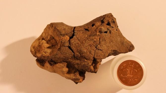 2004년 영국 서식스 주에서 발견된 화석(사진)은 이구아노돈의 뇌 화석인 것으로 밝혀졌다. - 제이미 히스콕스 제공