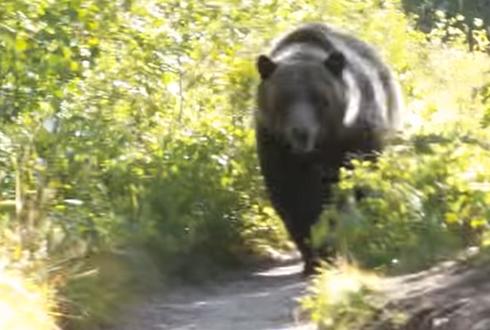 사람들을 쫓아오는 대형 곰 '공포'