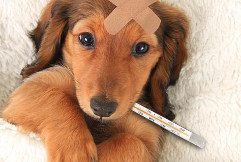 개를 키우고 싶은데, 동물병원 비용이 걱정됩니다